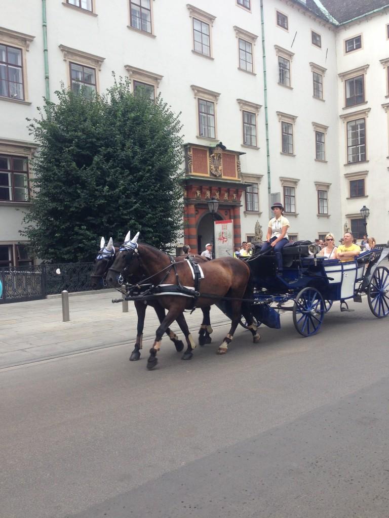 İspanyol Binicilik Okulu da Hofburg Sarayı'nda yer alıyor.