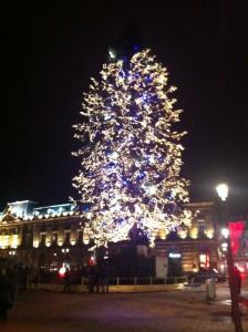Kleber Meydanı'ndaki Çam Ağacı