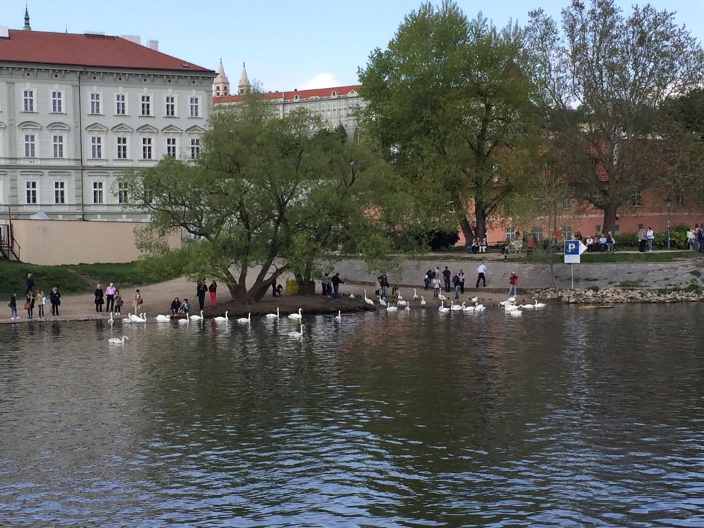 Franz Kafka Müzesi