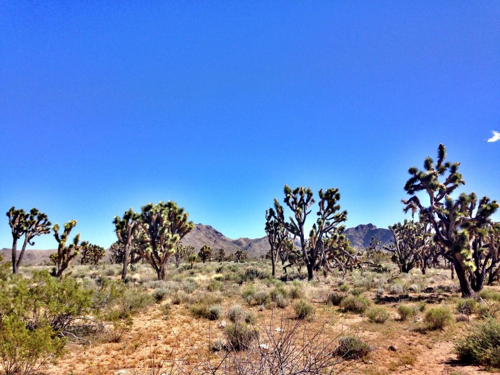 Yol boyunca göreceğiniz çöl kaktüsleri