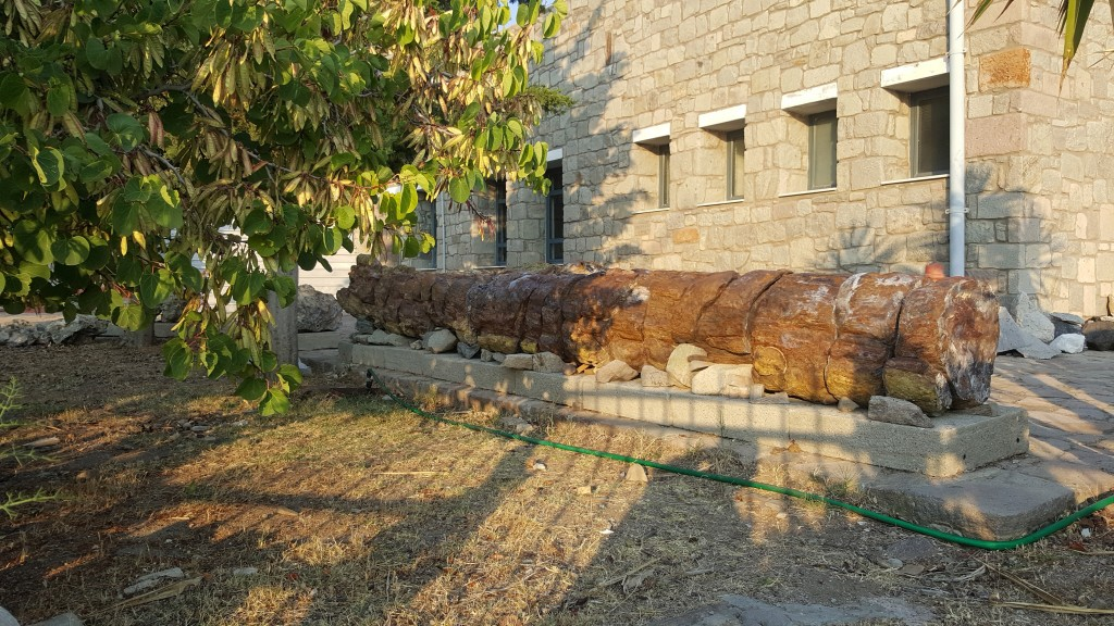 Doğal Tarih Müzesi - Taşlaşmış Ağaçlar